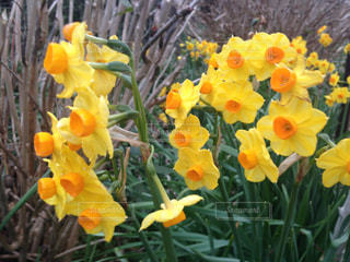 花の写真・画像素材[312639]