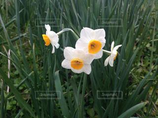 花の写真・画像素材[312646]
