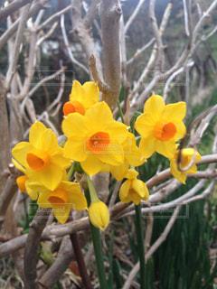 花の写真・画像素材[312648]