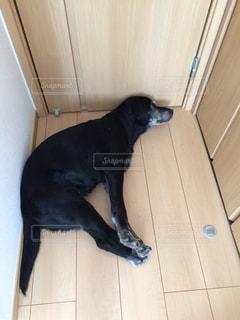 犬の写真・画像素材[308616]