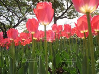 花の写真・画像素材[308656]