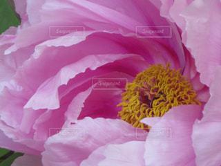 花の写真・画像素材[308662]