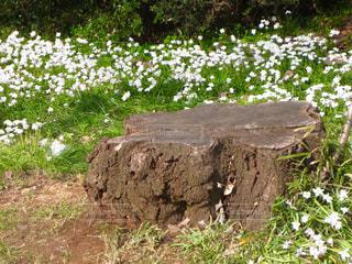 花の写真・画像素材[308689]