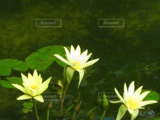 花の写真・画像素材[308691]