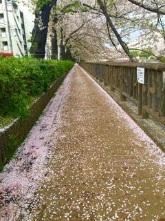 春の写真・画像素材[308699]
