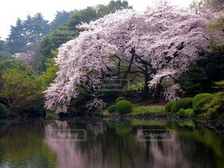 花の写真・画像素材[308704]