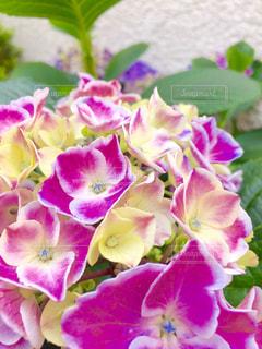 花の写真・画像素材[308814]