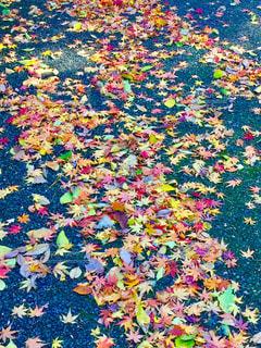 秋の写真・画像素材[308818]