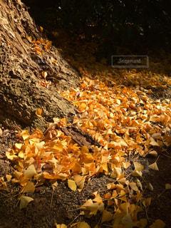 秋の写真・画像素材[308823]