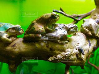 水族館の写真・画像素材[312863]