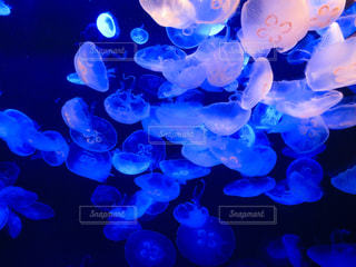青の写真・画像素材[312869]