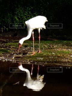 鳥の写真・画像素材[314105]