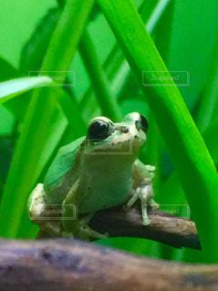 緑の写真・画像素材[314107]