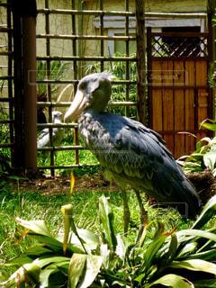 鳥の写真・画像素材[314111]