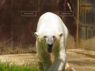 動物園の写真・画像素材[314112]