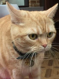 猫の写真・画像素材[323482]