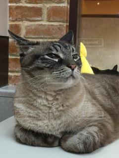 猫の写真・画像素材[323484]
