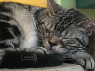 猫の写真・画像素材[323488]