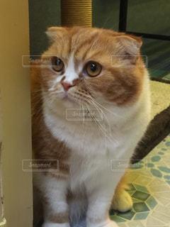 猫の写真・画像素材[323489]