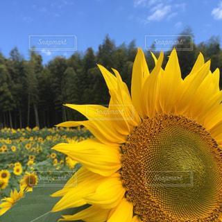 空の写真・画像素材[308717]