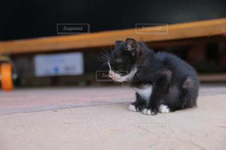 猫の写真・画像素材[309177]