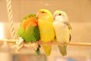 鳥の写真・画像素材[309198]