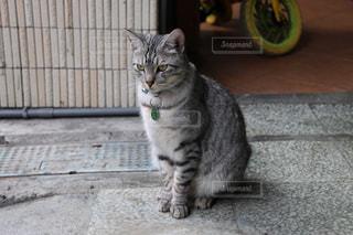 猫 - No.309444