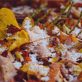 自然の写真・画像素材[309393]