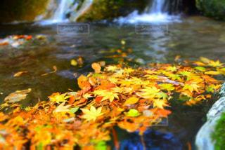 自然の写真・画像素材[314794]