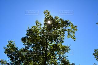 自然の写真・画像素材[319247]