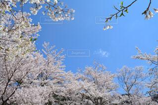 自然の写真・画像素材[452695]