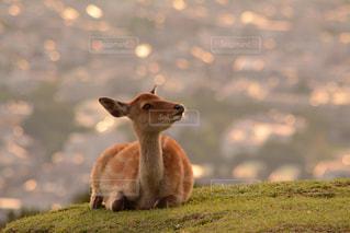 子鹿ちゃんの写真・画像素材[755761]