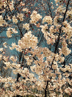 春 - No.354844
