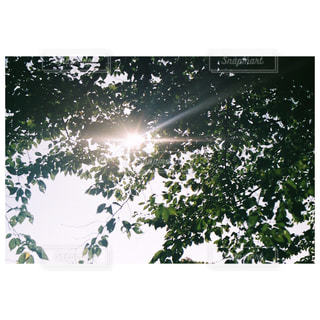 樹木の写真・画像素材[310038]