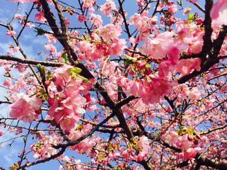 花の写真・画像素材[331043]