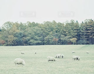 自然の写真・画像素材[2291]