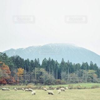 自然の写真・画像素材[2261]