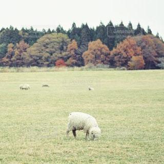自然の写真・画像素材[2253]