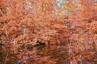 自然の写真・画像素材[2252]