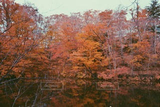 自然の写真・画像素材[2251]