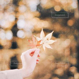 秋色の写真・画像素材[1061091]