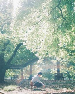 緑と光の写真・画像素材[1064120]