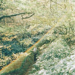 虹色の光と - No.1064141