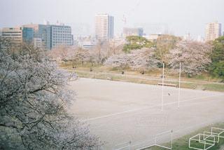 グラウンドと桜の写真・画像素材[1099519]