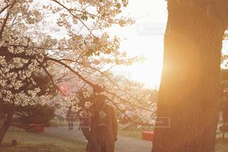 夕暮れ時の桜 - No.1099521
