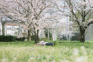 桜の木の下でお昼寝の写真・画像素材[1107697]