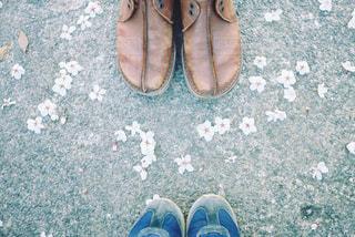 桜と一緒に。の写真・画像素材[1107702]