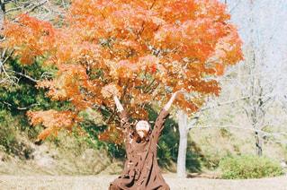 近くの木のアップの写真・画像素材[1792072]