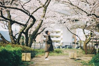桜の木の下での写真・画像素材[1884044]