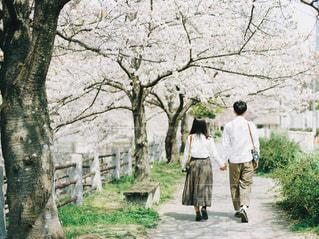 桜並木をペアルックでお散歩!の写真・画像素材[1884045]